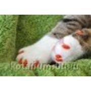 "Колпачки на когти ""Мягкие лапки"" для кошки фото"