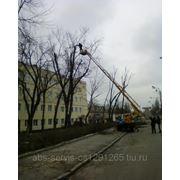 Кронирование деревьев. фото