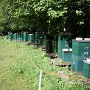 Продаю одну из пчелиных пасек фото