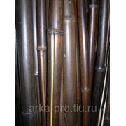 Стволы бамбука, цвет шоколад, d=40-50мм, l=2.5-3.0м фото