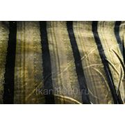 Бархат болотный в черную полоску фото