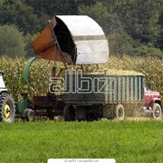 Перевозка сыпучих грузов фото