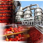 Линии по переработке овощей фото