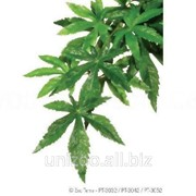Террариумное растение шелковое Hagen Exo Terra ABULITON (L) фото