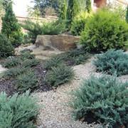 7. Озеленение участка и ландшафтный дизайн фото