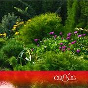 Создание цветочных клумб. Цветники фото