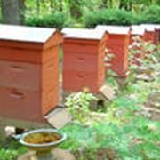 Содержание пчел в ульях