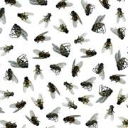 Обработка от мух фото