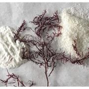 Агар, агар-агар реализация оптом, пищевые добавки в ассортименте фото