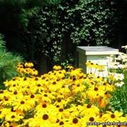 Пчелопакеты среднерусской породы пчел башкирской популяции . Весна 2015г фото