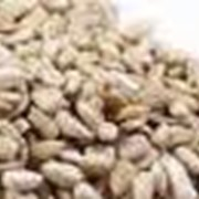 Ядро семян подсолнечника кондитерское фото