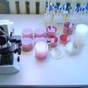 Бактериологические, паразитологические исследования фото