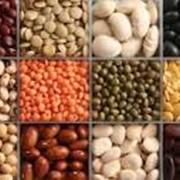 Бобовые продукты на экспорт. фото