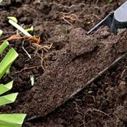 Анализ почвы, посадки и уход за растениями фото