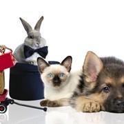 Товары для животных (зоотовары) фото