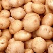 Продажа картофеля фото