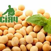 Насіння СОЯ ультрарання ГМО фото