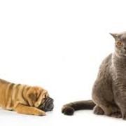 Вакцинация животных. фото