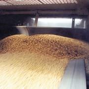 Переработка зерновых на крупу фото