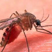 Биологический инсектицид Агро-Био-Тех фото