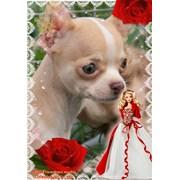 щенок чихуахуа девочка редкого окраса фото