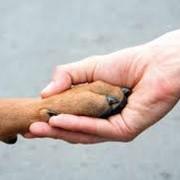 Страхование домашних питомцев и породистых животных. фото