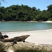 Экзотические туры в Коста Рику фото