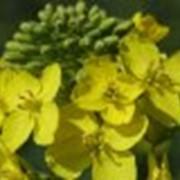 Закуп сельскохозяйственной продукции фото
