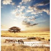 Фотообои с изображением животных фото