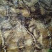 Кролик (натуральный мех) продажа, опт Украина фото