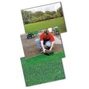 Посев семенного газона фото