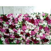 Стена из живых цветов фото