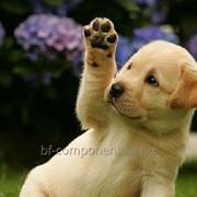 Продукция ветеринарного назначения для собак Лактобифадол фото