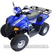 Квадроцикл STELS ATV 110 DINLI AB66C фото