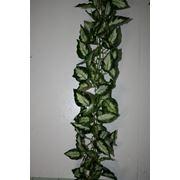 Лианы на цепочках с мелкой зеленью фото