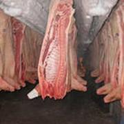Мясо свинины полутуши фото