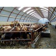 Ангары и животноводческие комплексы фото
