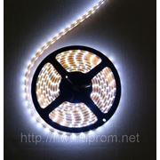 Светодиодная лента (холодный белый) IP33 фото