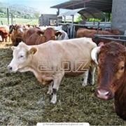 Оборудование и строительство товарно-молочных ферм фото
