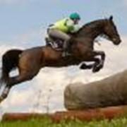 Обучение и тренировки, верховая езда фото