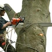 Удаление деревьев, вырубка деревьев под застройку фото