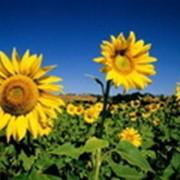 Удобрения для сельскохозяйственных культур в Украине, Купить, Цена, Фото