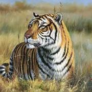Гармония мира (Тигр) фото