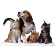 Парикмахерские услуги домашним животным