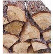 Услуги по заготовке круглого леса пиловочника и сопутствующих материалов фото