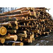 Закупка леса фото