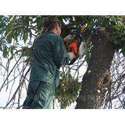Опиловка деревьев фото