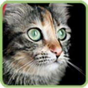 фото предложения ID 326919