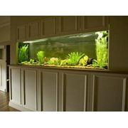 Идея дизайна офиса - аквариум под ключ фото