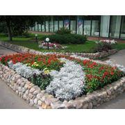 Городское и частное озеленение фото